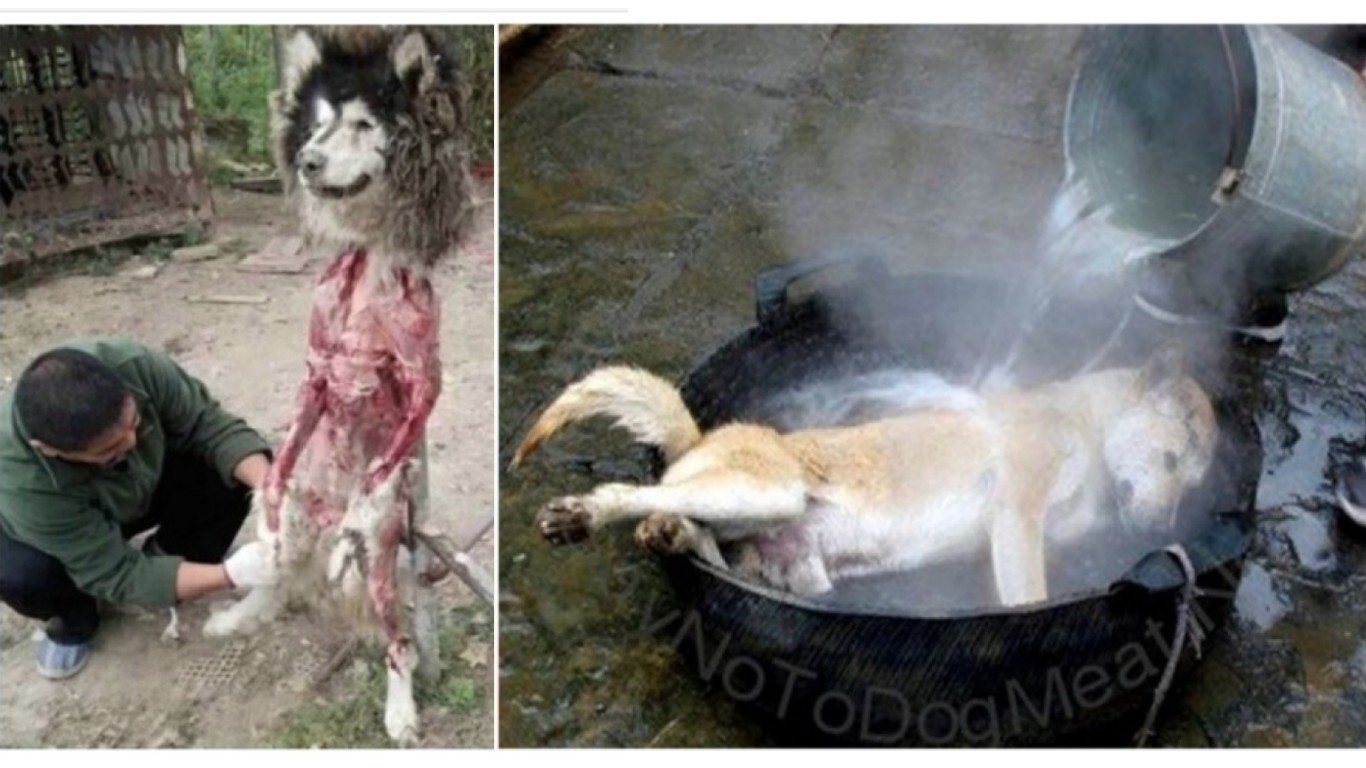 Petition: Petition: Chinese dog eating festival starts in 4 weeks – take action now!