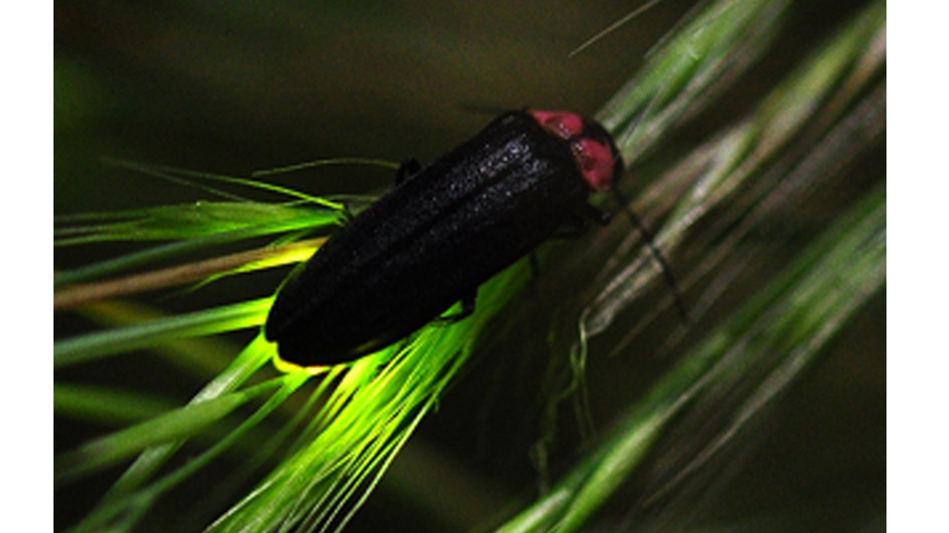 Oppose beach development that will harm the Bethany firefly!