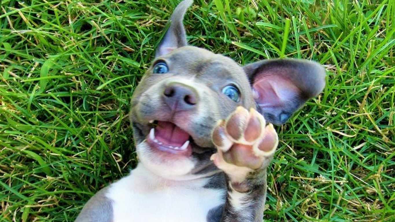 Help lift the pit bull ban in Wisconsin!