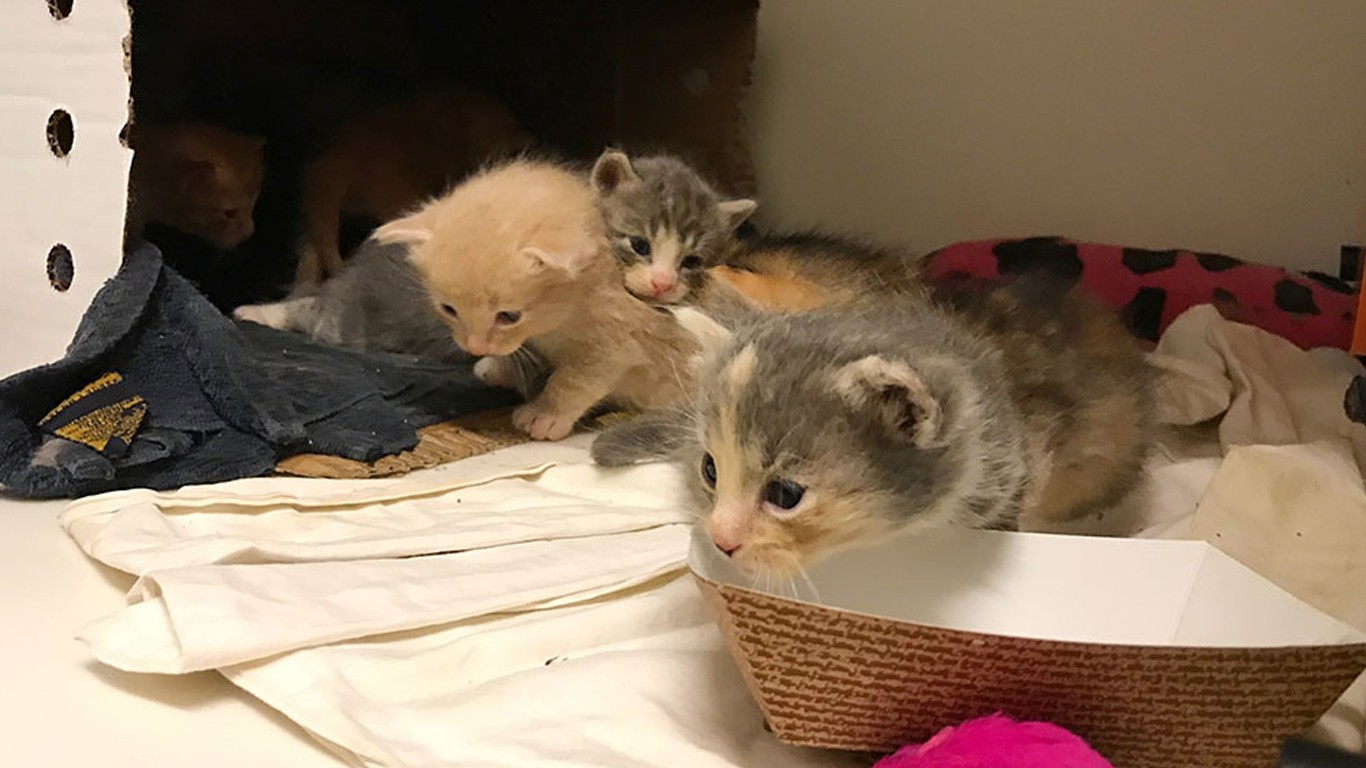 Promote heroes that saved mother cat and her babies from storm drain!