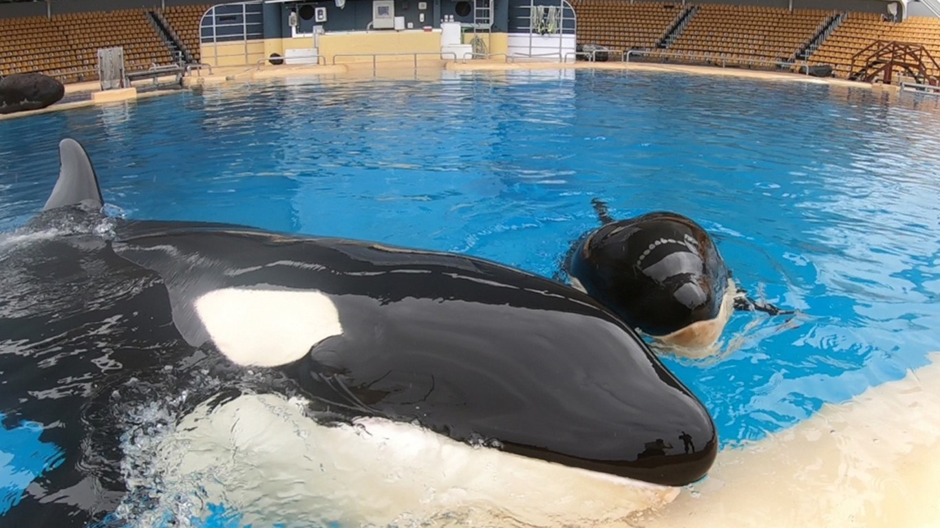 Help free Morgan the orca and her newborn baby!