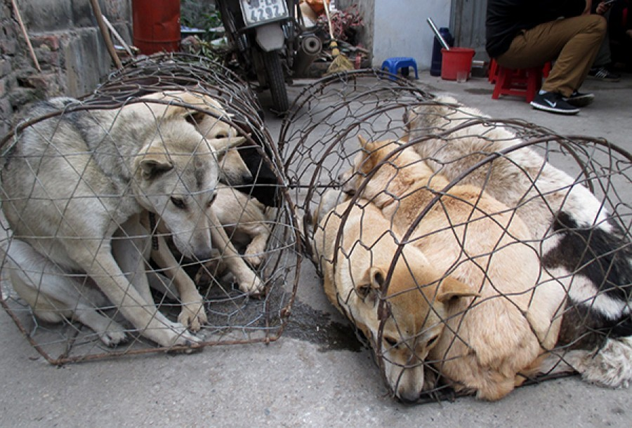 Petition: Time to speak up for the animals of Vietnam – will you?